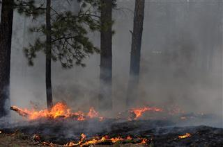 THE BLACK FOREST FIRE CONTINUES TO BURN NORTHEAST OF COLORADO SPRINGS, CO.