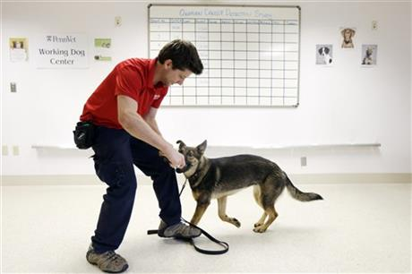 Cancer Sniffing Dogs