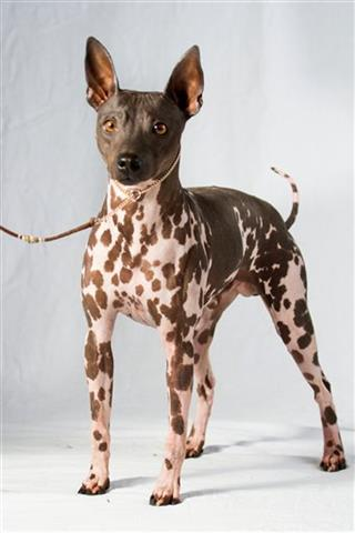 Dogs-New Breeds