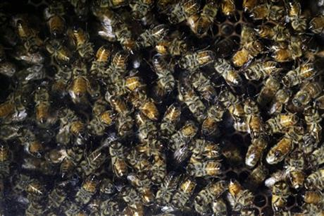Bees Pesticides