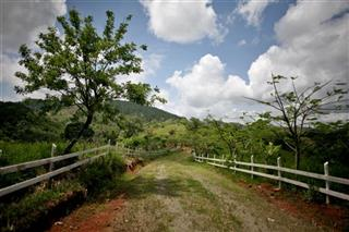 Dominican Republic Forest Preservation