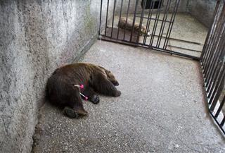 Kosovo Rescued Bears