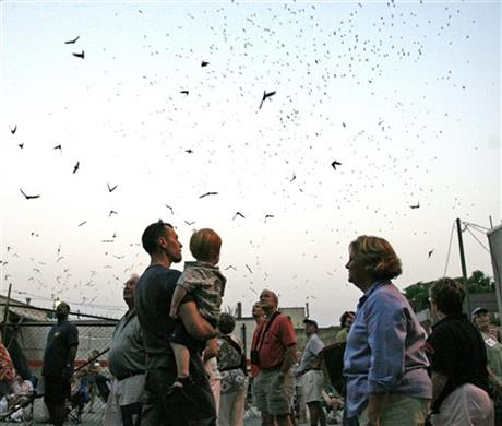 Purple Martin Festival