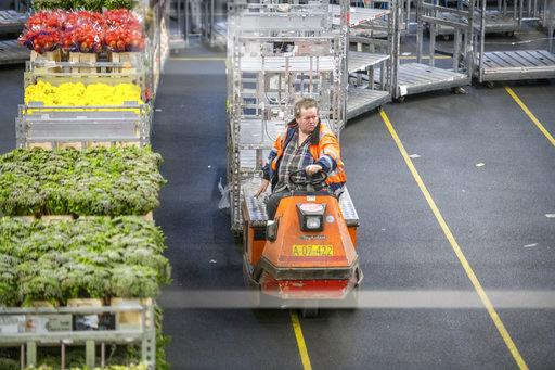 A man drives a cart used for transporting the flowers throughout a warehouse at the worlds largest flower auction, Royal Flora Holland. Amsterdam, Netherlands