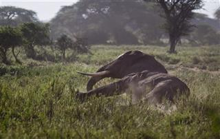 Kenya Tanzania Elephant Slaughter