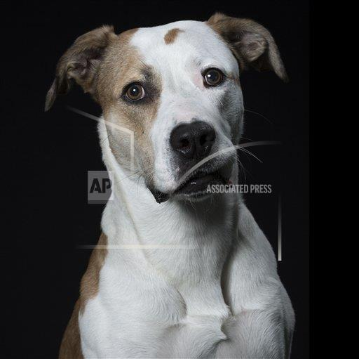 REX AP     4388448t Photographer Captures Expressive, Close-Up Portraits Of Cats And Dogs, Amsterdam, Netherlands, Nov 2014