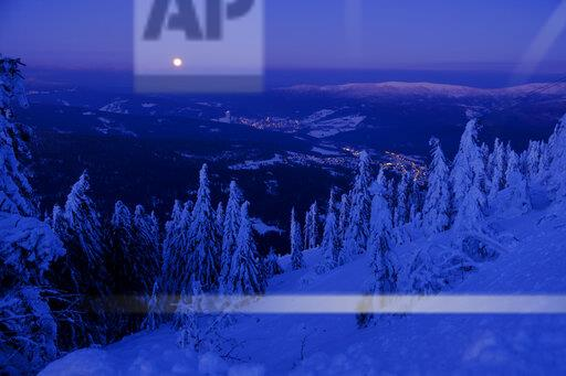Germany, Bavaria, Bavarian Forest in winter, Great Arber, Arbermandl, snow-capped spruces at dusk with moon