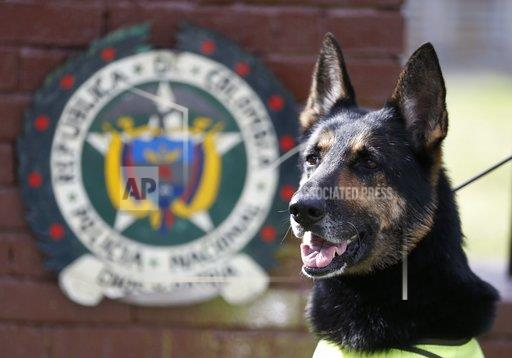Colombia Threatened Drug Dog
