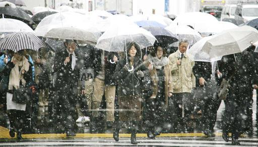 Early Snow in Tokyo