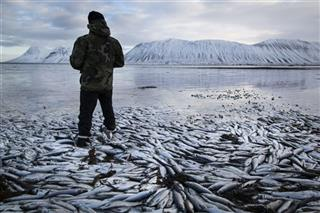 APTOPIX Iceland Fish Deaths
