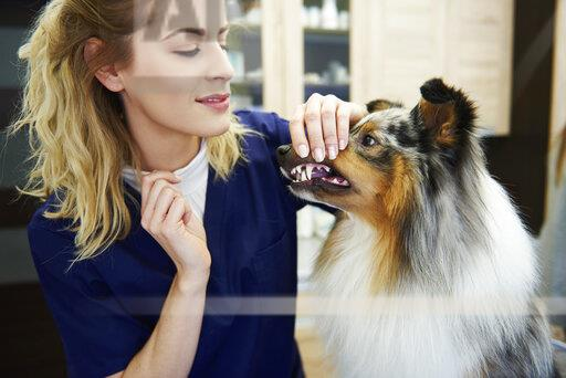 Female veterinarian examining dog's teeth in veterinary surgery