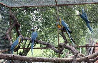 Bolivia Endangered Macaws