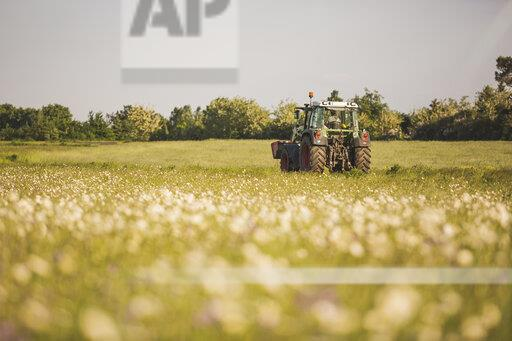 Germany, Brandenburg, Meadow with marguerite, tractor