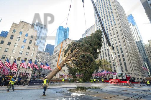 2020 Rockefeller Center Christmas Tree Arrives in New York City