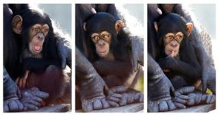 Chimp Rehab