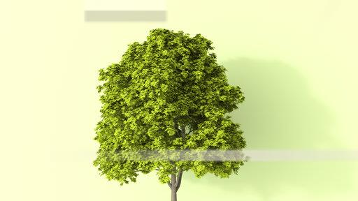 3D rendering, Lush tree in summer