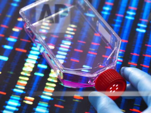 Genetic Engineering, Scientist viewing cells in a culture jar with a DNA profiles on a screen in the background illustrating gene editing