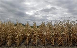 Ethanol Corn Shortage