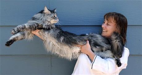 ODD Worlds Longest Cat