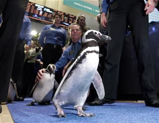 Wall Street SeaWorld IPO