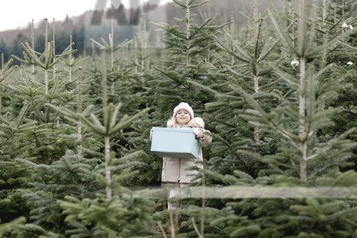 Girl carrying gift box on a Christmas tree plantation