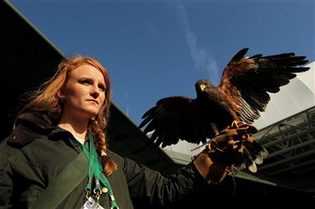 Britain Tennis Wimbledon Hawk