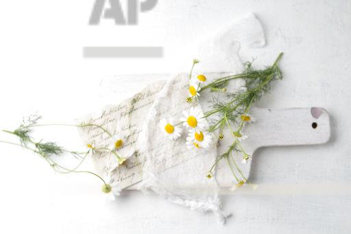 Still life with chamomile flowers