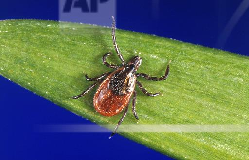 Lyme Disease New England