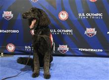 US Swim Trials Going to the Dogs Swimming