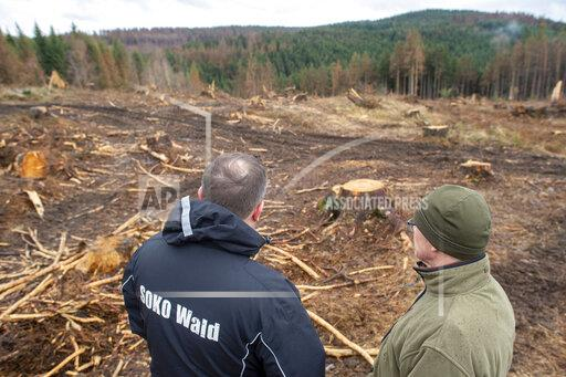 Forest inspection with Federal Forest Commissioner