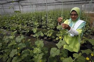Malaysia Malaysia Farms For Poor