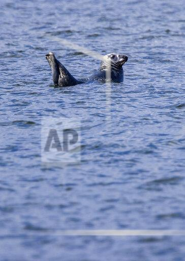 Seal tour in the Greifswald Bodden