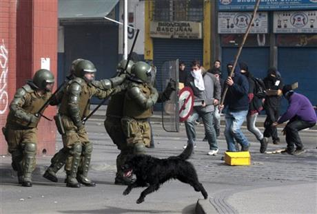 Chile Demo Dogs
