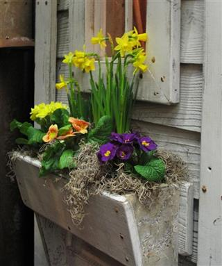 Gardening-Window Boxes
