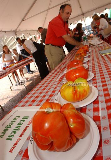 Associated Press Domestic News Massachusetts United States Feature TOMATO FACE OFF