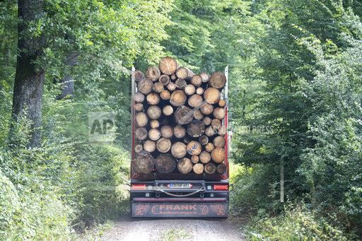 Lumber transporter in the forest