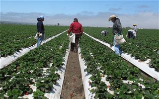 Farmworker Deaths Bill