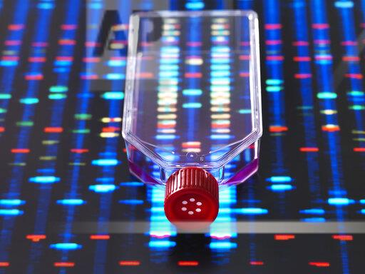 Genetic Engineering, culture jar with a DNA profiles on a screen in the background, illustrating gene editing