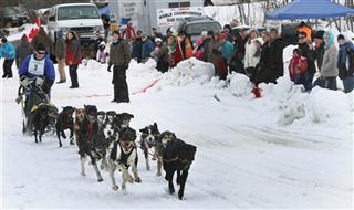 Sled Dog Derby