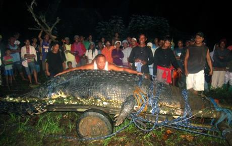 Philippines Giant Crocodile Dies