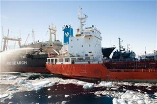 Antarctica Whaling Incident
