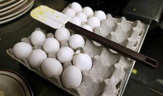 Food and Farm Egg Inspections