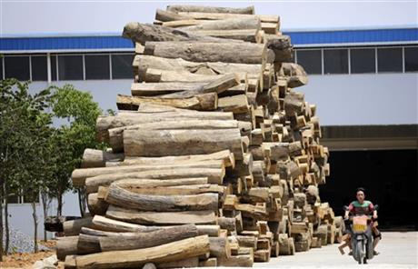 China Illegal Timber