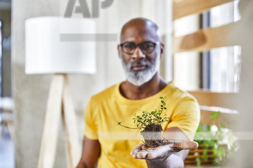 Mature businessman holding plant in office