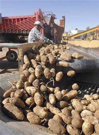Food and Farm Potato Lawsuit