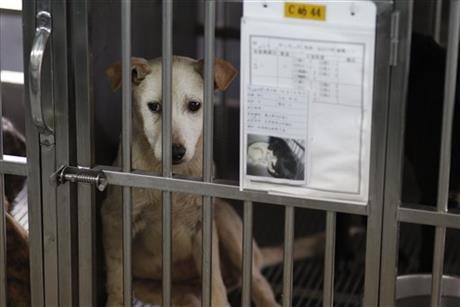 Taiwan Doomed Dogs