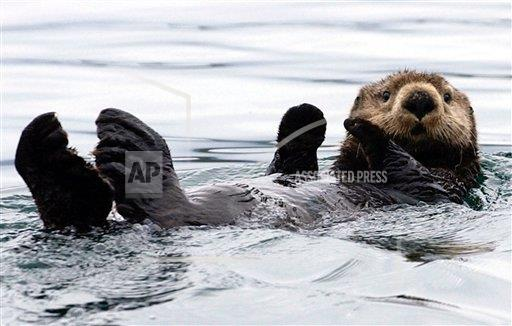 Sea Otter Bounty