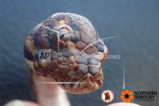 Three-eyed snake discovered in northern Australia