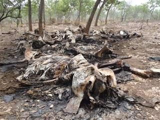 Cameroon Elephant Poaching