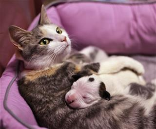 Cat Nursing Puppy